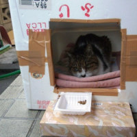 一時、行方不明になった猫