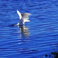 鷺と鴨inびわ湖大津