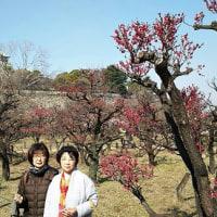 大阪城公園の梅林を見に行ってきました。(TT)