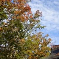 金峯神社の紅葉始まる