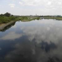 春爛漫の多摩川