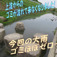 パクチーちゃんの実「コリアンダー」拡大画像&最初の1歩からブルブルベンちゃん2歩目は勇気!