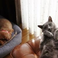 保護猫に頭ポンポンする家猫(動画)