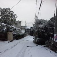 雪     The Snow