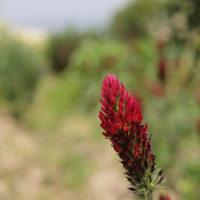 風が花の香りを運んできた