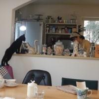 猫カフェ?
