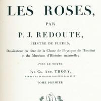 ルドゥーテのバラとのコラボレーション