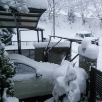 雪です。 3日ぶりに店に来ました。