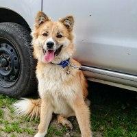 保護犬チャーミー、チャーチャ、草介3匹の譲渡の日