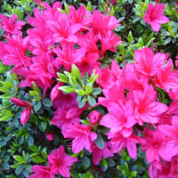 庭の花それぞれ