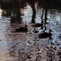 初鍋、暑かった!!・・夕刻の池の風景