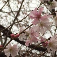 上野で。美術館、紅葉、桜