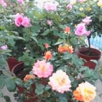 「母の日」を祝う