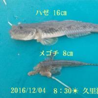 笑転爺の釣行記 12月4日☀☁ 久里浜海岸