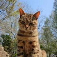 「「猫の国」の猫ネコちゃんズ②」「ネコ猫団「跳べ!必萌エサ目指し!」」