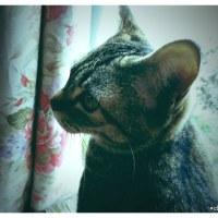 実家の猫・みかんちゃん