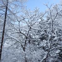 春の淡雪すが・・・。
