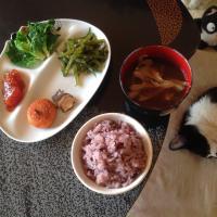 筋子と奄美大島の黒米ご飯