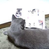 小豆ちゃん、ねこ自身を読む!