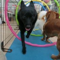 今週の土曜日は【わんこ整体day】 犬の幼稚園&躾教室@アロハドギー