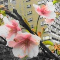 桜が咲いた♪