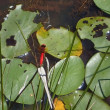 樫原湿原…ユウスゲ、モウセンゴケなど