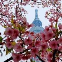 東京散歩  3