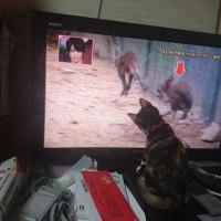 タマ、テレビに夢中