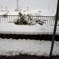 てまり3個完成 今朝も雪が積もっていました