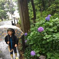 カタツムリは雨が嫌いなんだって