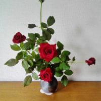 薔薇が咲いた~々~真っ赤な薔薇が~♪