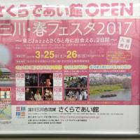 🌸寝屋川 桜のライトアップ