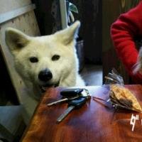 保護犬のあきちゃんとシロナちゃん