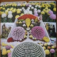 大相撲カレンダーと菊カレンダー