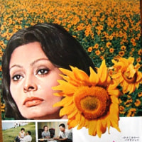Henry Mancini 映画「ひまわり」 Love theme from SUNFLOWER