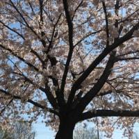 今年の春も花盛り~