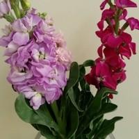 Flower Arrangement of my office