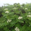 雨の白山 花盛り♪ 2