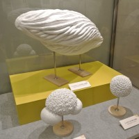 国立科学博物館で、 『花粉と花粉症の科学』 を見ました。