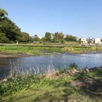 上江津湖(熊本市中央区)にてフライフィッシング