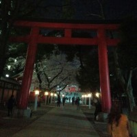花園神社の夜桜