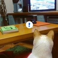 ネコも楽しめるネコ番組