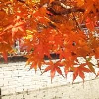 公園の紅葉。