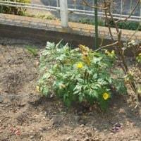 春の庭の植物たち