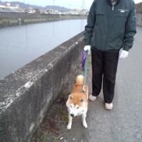チコさんお父さんと散歩
