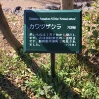 堀川美会植樹!