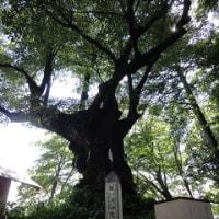 軽井沢に行きました☆1