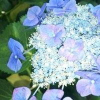 この時期爽やかに咲くお花