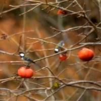 秋の収穫...   やっとの事でお目見えさん達が...