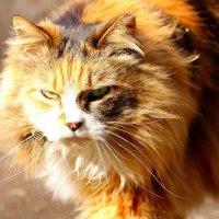 ドナルドトランプにそっくりな猫